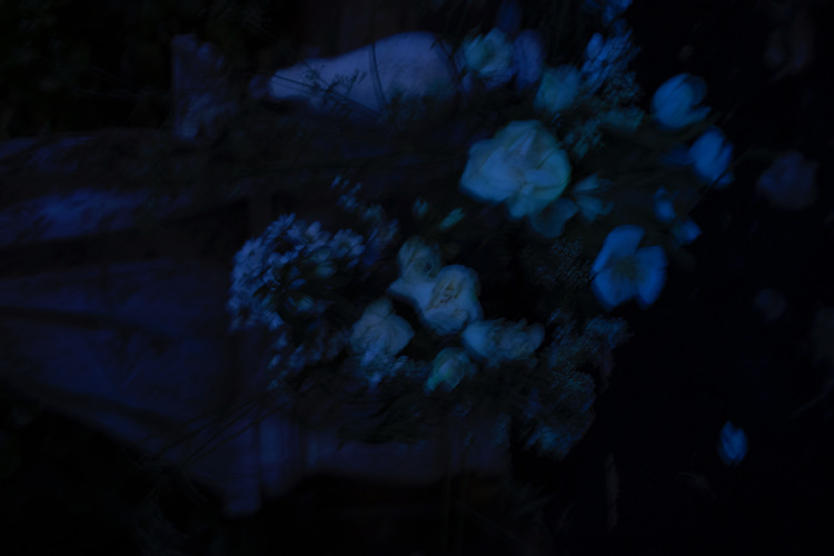 Dark photograph with white flowers